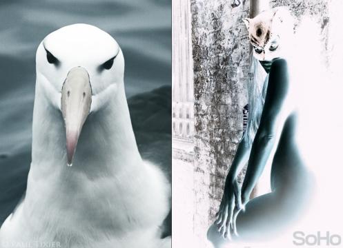 albatros y gata