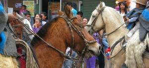 Pintag caballos, publico